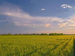 Агропредприятие; фермерское хозяйство 500 - 100000 Га