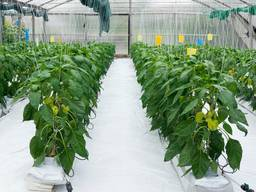 Агроволокно BENNO agro UV 30 г/м² 1.6 x 100 м, белое