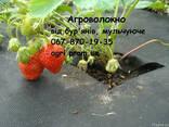 Агроволокно чорне Premium-Agro, Польща - фото 2