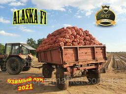 Alaska F1 Озимой ЛУК 65TON/ГА MRT Seeds 10000