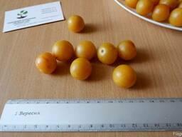 Алыча жёлтая семена (10 шт) (насіння для саджанців)семечка.