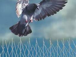 Антиприсадные шипы от птиц 0, 5 м