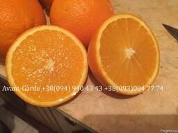Апельсины оптом (Турция, Египет)