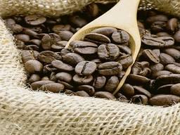 Arabica coffee beans green