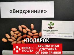 """Арахис сорт """"Вирджиния"""" семена (20 шт)"""
