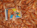 Азовская креветка - фото 4