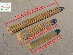 Бамбук, бамбуковые стволы, бамбуковые опоры. Мелкий/крупный