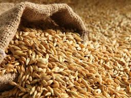 Barley cif caspian sea ports (Iran)