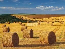 База данных сх предприятий, фермеров по областям Украины.
