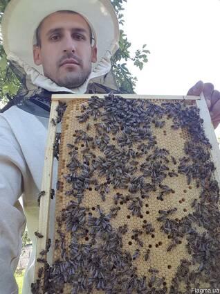 Бджоломатка 2018