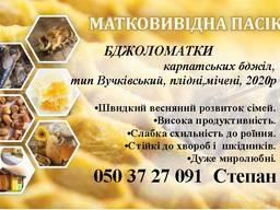 Бджоломатки Карпатської популяції