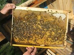 Бджолопакети 2019