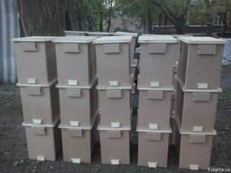 Бджолопакети Карніка 2019