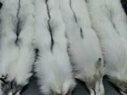 Белая финская лиса