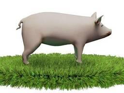 Белково-витаминные добавки для свиней (СТ) отлучка