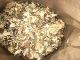 Белый сушеный гриб