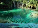 Биопрепарат Био-плюс для шоковой очистки аквариумов и прудов - фото 3