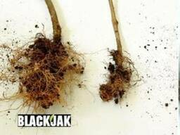 Black Jak (Блэк Джек) биостимулятор роста и корнеобразовая