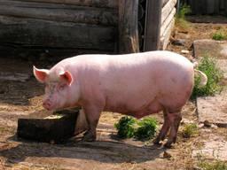"БМВД 15% ""ComFerma"" для свиней"