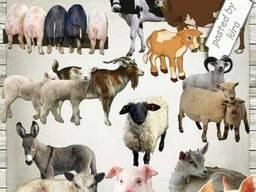 БМВД для Свиней ,коров броллеров и др животных