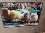 Брудер для цыплят Омега - фото 3