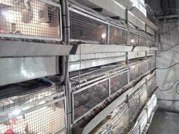 Брудера для перепелов и цыплят с автоматическим навозоудален