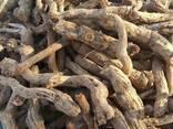 Бузина травяниста корінь (свіжий) - фото 1
