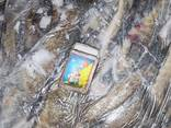 Бычок крупный свежемороженый - фото 4