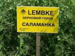 Cемена гороха Lembke Саламанка 1 репродукция урожая 2018.