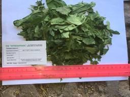Черемша листя сушене, часник ведмежий. Allium ursinum leaves