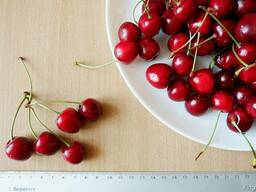 "Черешня красная ""Валерий Чкалов"" семена (10 штук) насіння."