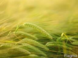Черкасское агрохозяйство, базой отдыха зарыбленным ставком