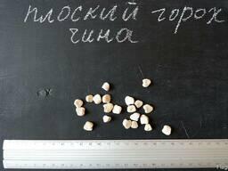 Чина семена (10 штук) (плоский горох, луговой горошек) чіна.
