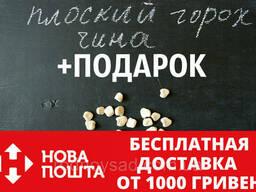 Чина семена (50 штук) (плоский горох, луговой горошек). ..