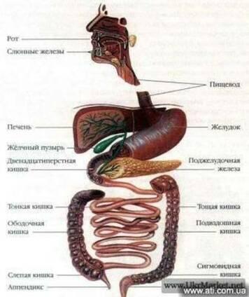 Чистка толстого кишечника – Гидроколонотерапия
