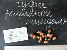 Чуфа семена (10шт)(земляной миндаль, сыть, тигровый орех)