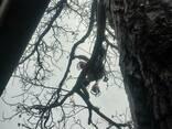 Cпил деревьев - фото 7