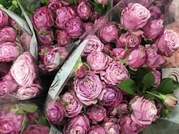 Цветы оптом Голландия | Оптовый прайс | Розы, тюльпаны