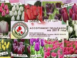Цветы оптом в Луганске. Тюльпаны на 14 февраля и 8 марта.