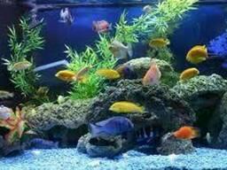 Декор для аквариума, аквариумы, растения. Полная. . .