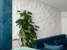 Ремонт помещений. Малярные работы. Шпаклевка стен и потолков.