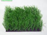 Декоративная трава - фото 4