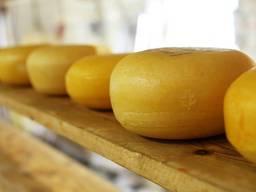 Продам действующий Молочный Сыр завод