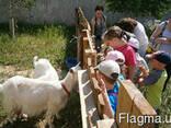 """Дитячий денний табір """"Канікули - з користю!"""" - фото 2"""