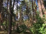 Дом в лесу, Кировское ( Обуховка) - фото 4