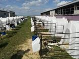 Домик для содержания теленка - photo 2
