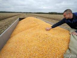 Дорого Кукурузу
