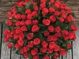 Доставка цветов Днепропетровск - фото 4