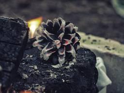 Древесный уголь для Гурманов от TM Pen'ok