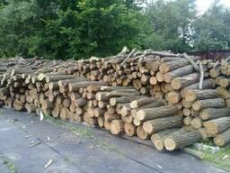 Купим кругляк бук і граб на дрова